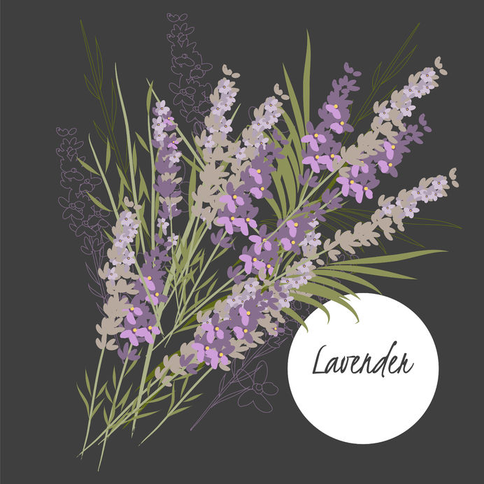 47164243 - illustration with beautiful flowers lavender. vector