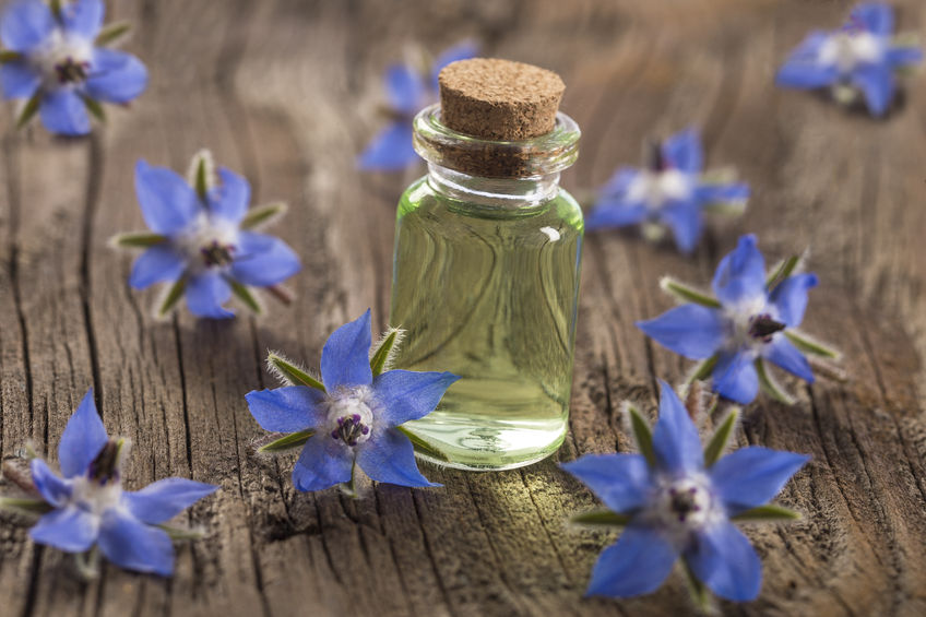 62013008 - borage oil borago officinalis on wooden background