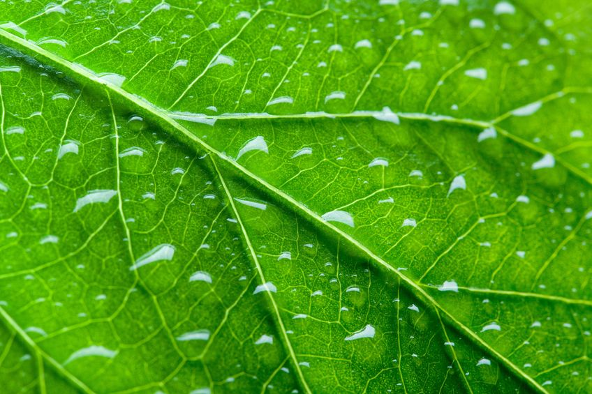 11684472 - green leaf texture with droplets. macro
